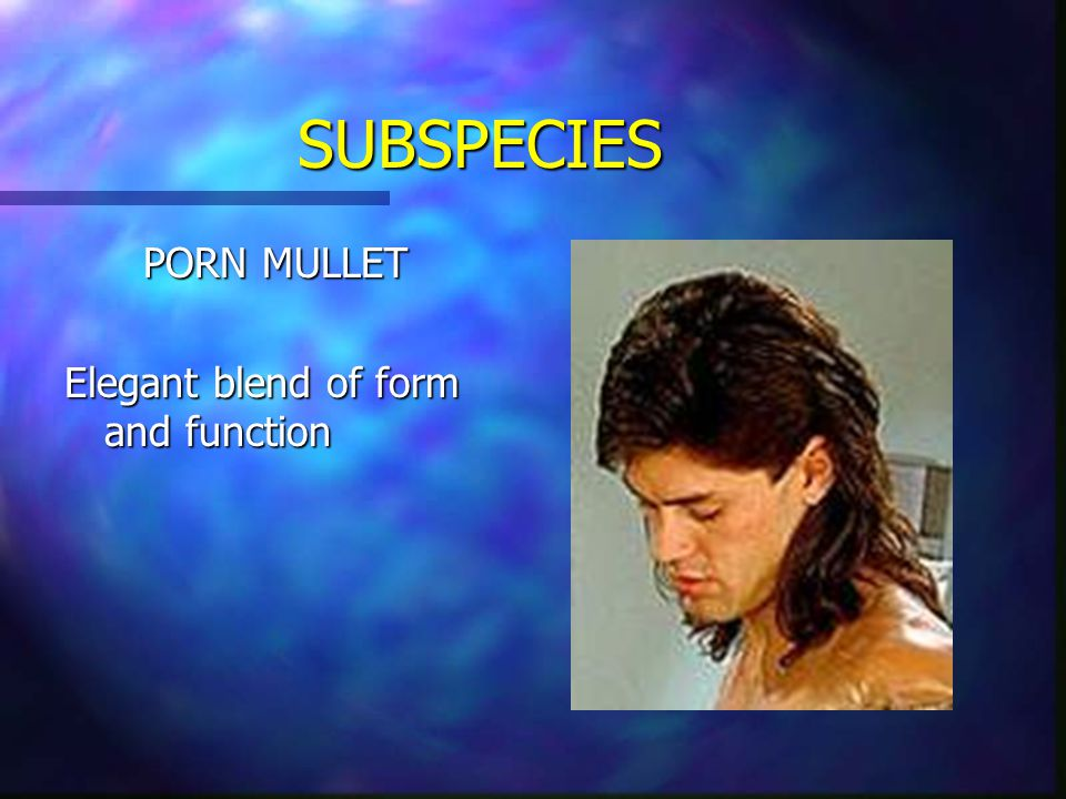 SUBSPECIES BMX MULLET Among the longest of the subspecies Quite frequently mistaken for ugly girls