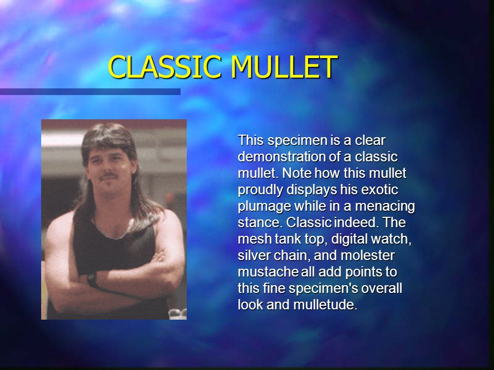 ANATOMY OF A MULLET Business Party Party