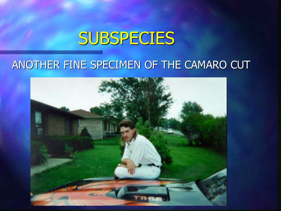 SUBSPECIES CAMARO CUT The Camaro Mullet used to have full reign over the mullet brethren, but that was back in the 70's and 80's. This species has fal