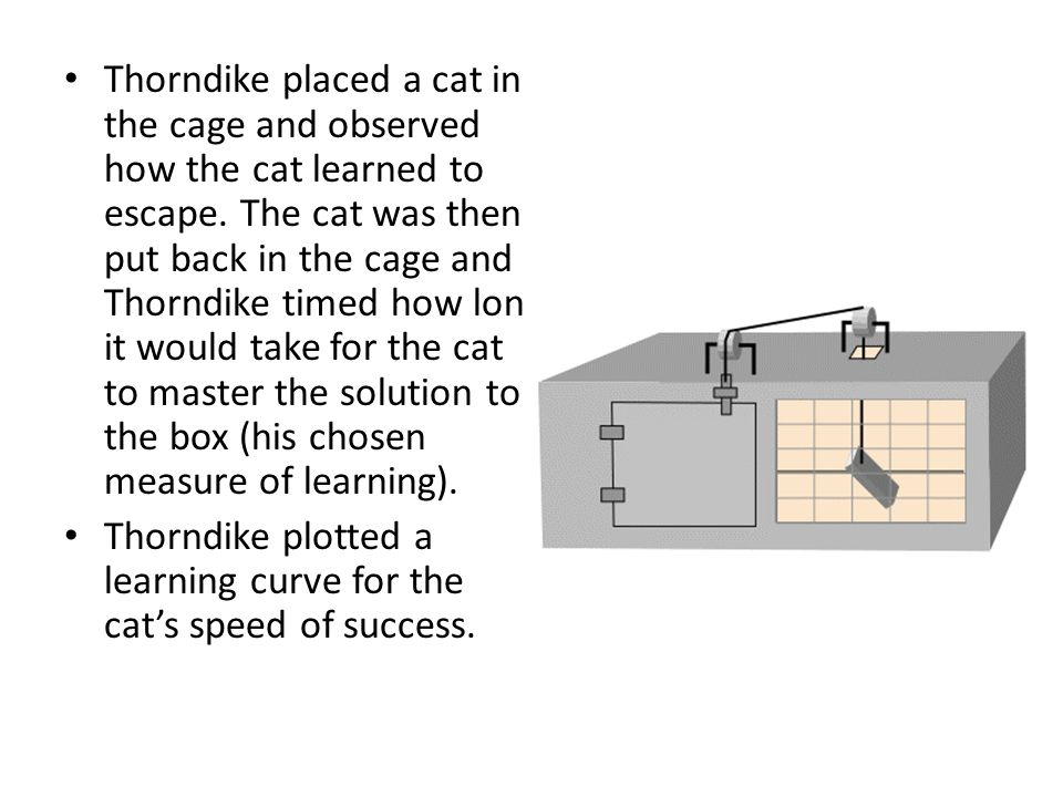 Thorndike placed a cat in the cage and observed how the cat learned to escape. The cat was then put back in the cage and Thorndike timed how long it w