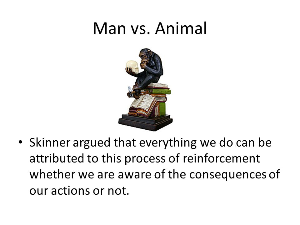 Man vs. Animal Skinner argued that everything we do can be attributed to this process of reinforcement whether we are aware of the consequences of our