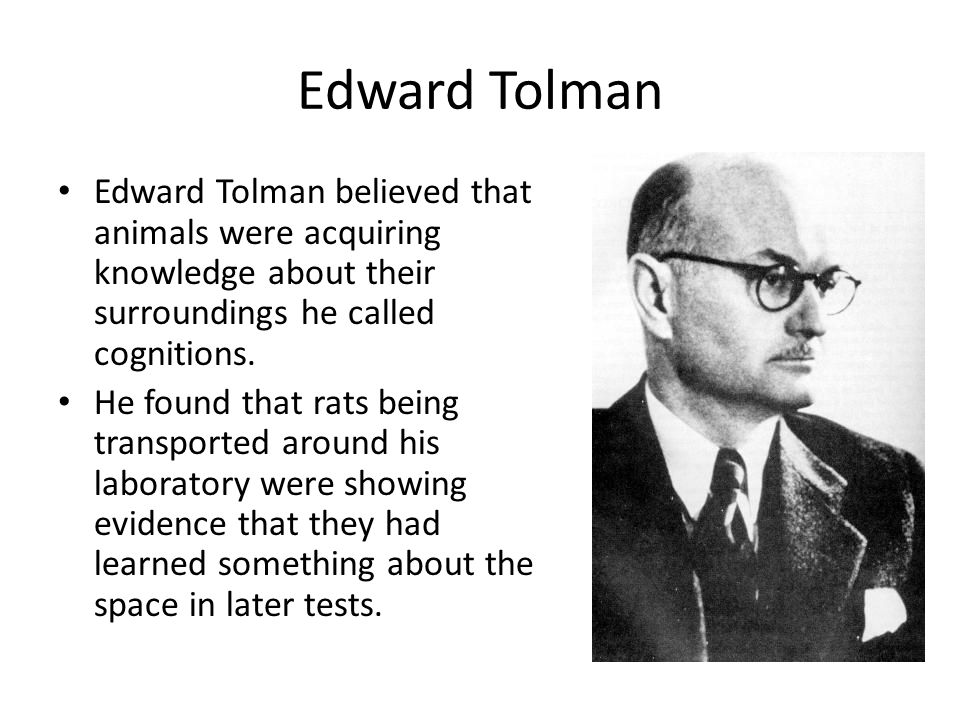Edward Tolman Edward Tolman believed that animals were acquiring knowledge about their surroundings he called cognitions. He found that rats being tra