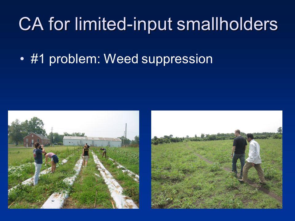 Solution? High biomass cover crops (killed mulches) Mulch Ted Kornecki, 2008