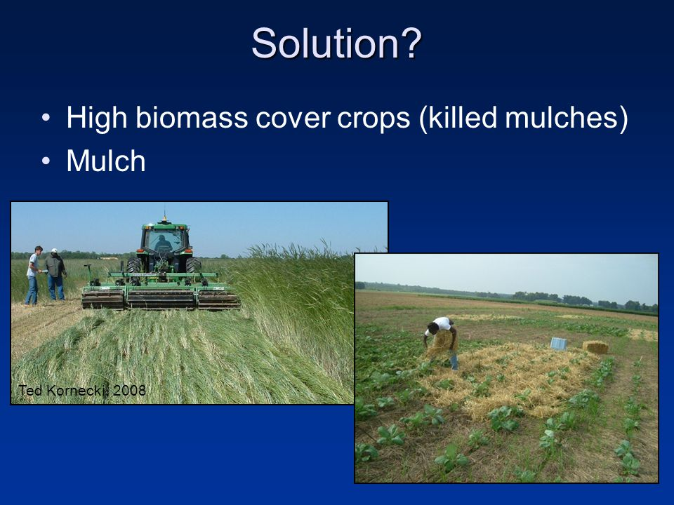 Hypothesis Combine cover crops and mulches Improve soil quality on productive field Effects on: –Weeds, soil C, yields