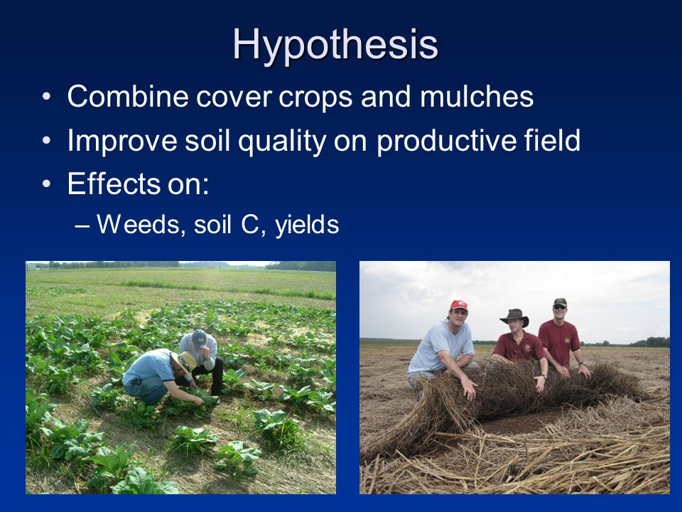 Objective Quantify weed suppression of a summer cover crop and organic mulches under no-till collard (Brassica oleracea L.) production during conversion to CA: Weed populations SOC Collard yield