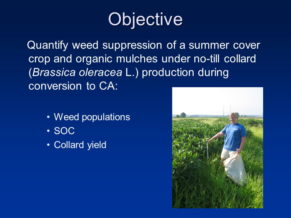 Methods Previous fallow (3 years) 3 years: 2005–2008 Central-Eastern AL, USA 2x4 RCB: –2 summer cover crops: Forage soybean, weed fallow –4 organic mulches: Lespedeza, mimosa, oat straw, control 6.7 Mg ha -1 yr -1