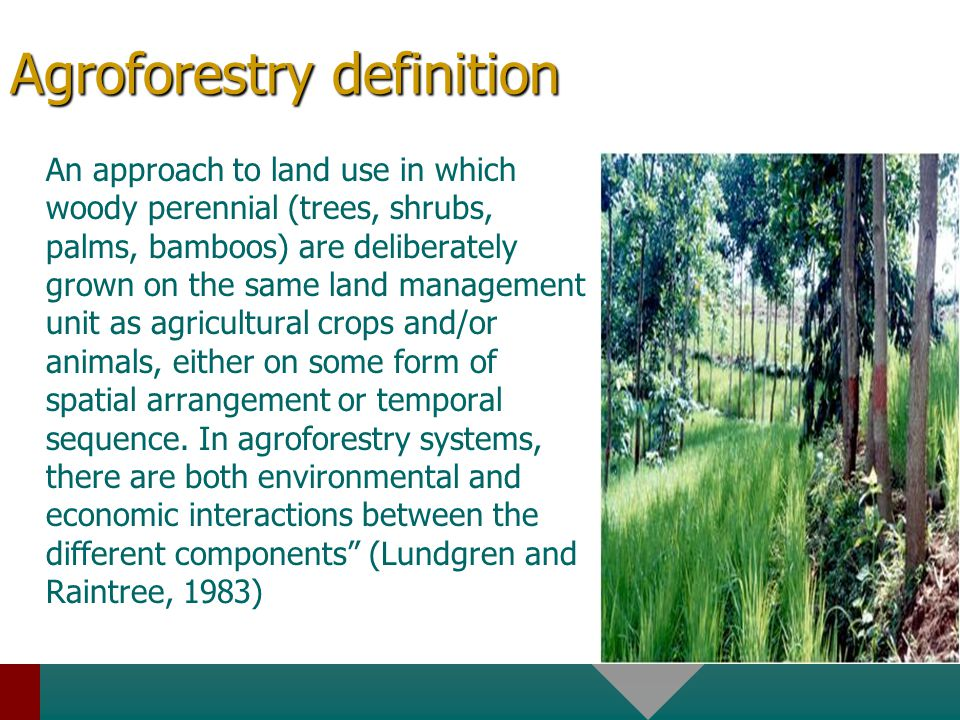 Agroforestry definition An approach to land use in which woody perennial (trees, shrubs, palms, bamboos) are deliberately grown on the same land management unit as agricultural crops and/or animals, either on some form of spatial arrangement or temporal sequence.