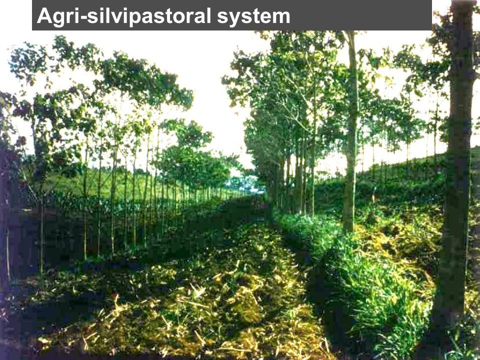 Agri-silvipastoral system