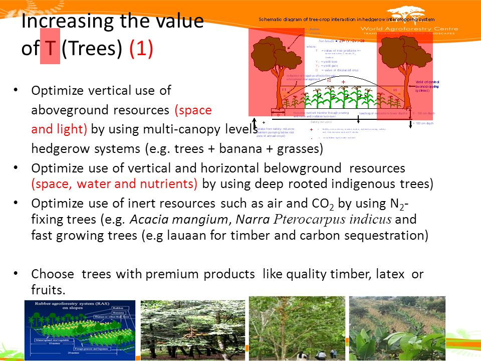 Increasing the value of T (Trees) (1) Optimize vertical use of aboveground resources (space and light) by using multi-canopy levels hedgerow systems (e.g.