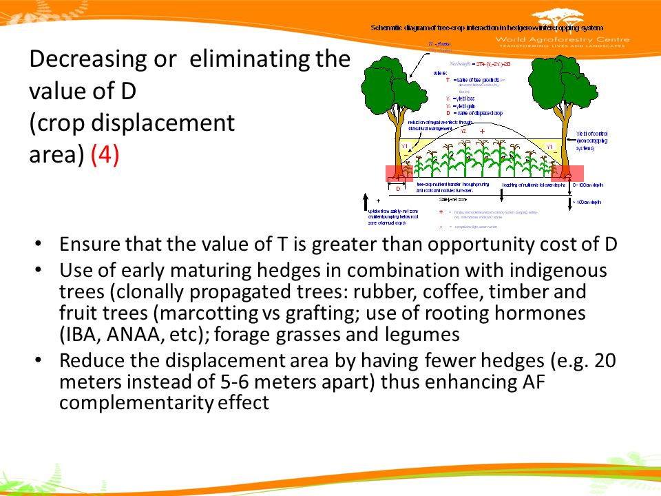 Decreasing or eliminating the value of D (crop displacement area) (4) Ensure that the value of T is greater than opportunity cost of D Use of early maturing hedges in combination with indigenous trees (clonally propagated trees: rubber, coffee, timber and fruit trees (marcotting vs grafting; use of rooting hormones (IBA, ANAA, etc); forage grasses and legumes Reduce the displacement area by having fewer hedges (e.g.