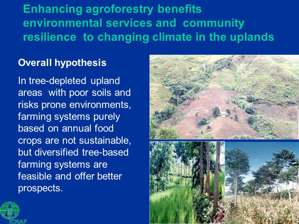 Enhancing agroforestry benefits environmental services and community resilience to changing climate in the uplands Overall hypothesis In tree-depleted upland areas with poor soils and risks prone environments, farming systems purely based on annual food crops are not sustainable, but diversified tree-based farming systems are feasible and offer better prospects.