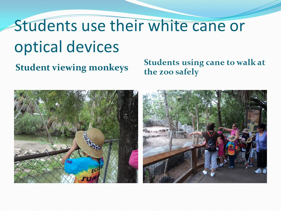 Students use their white cane or optical devices Student viewing monkeys Students using cane to walk at the zoo safely