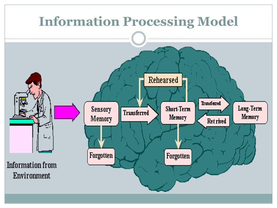 Information Processing Model
