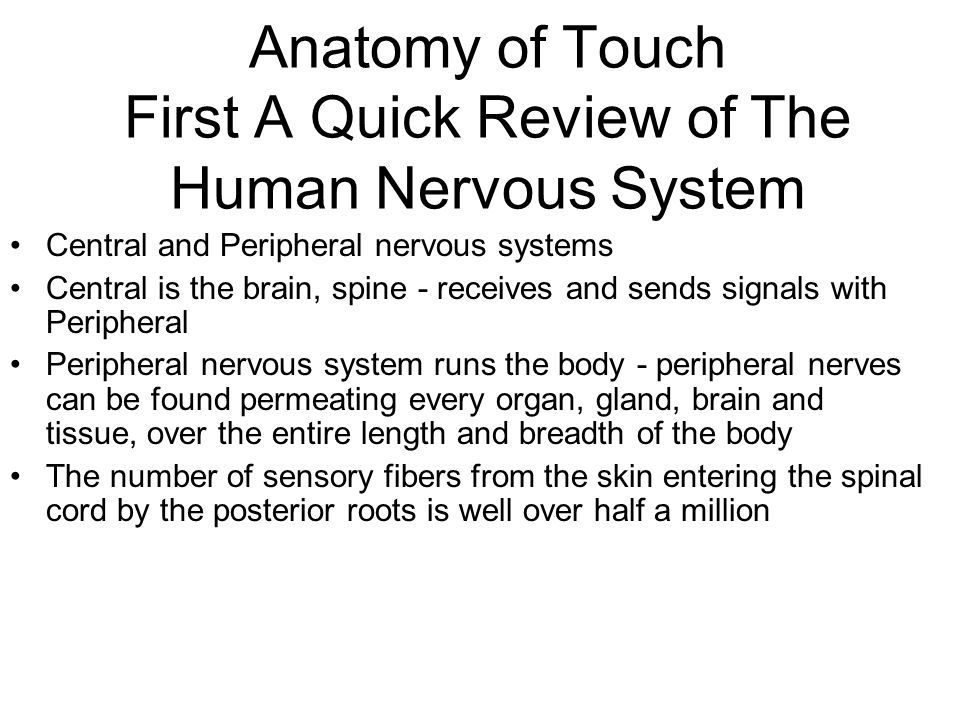 Anatomy of Touch First A Quick Review of The Human Nervous System Central and Peripheral nervous systems Central is the brain, spine - receives and se