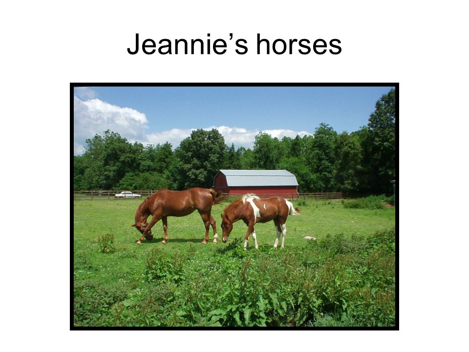 Jeannie's horses