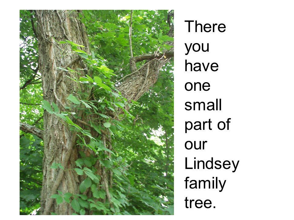 There you have one small part of our Lindsey family tree.