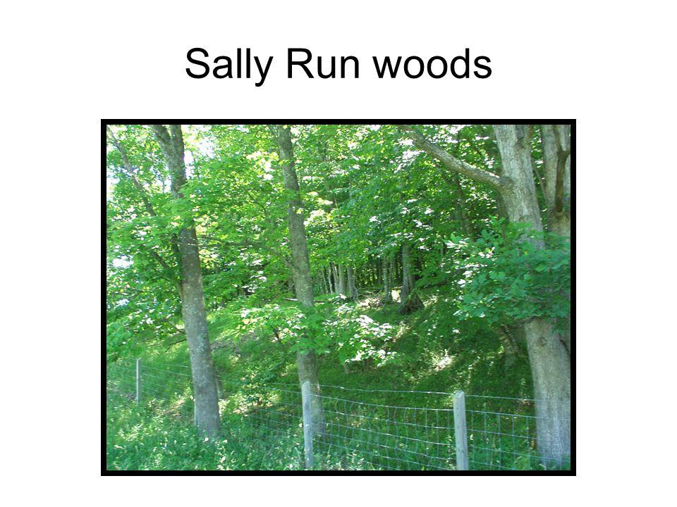 Sally Run woods
