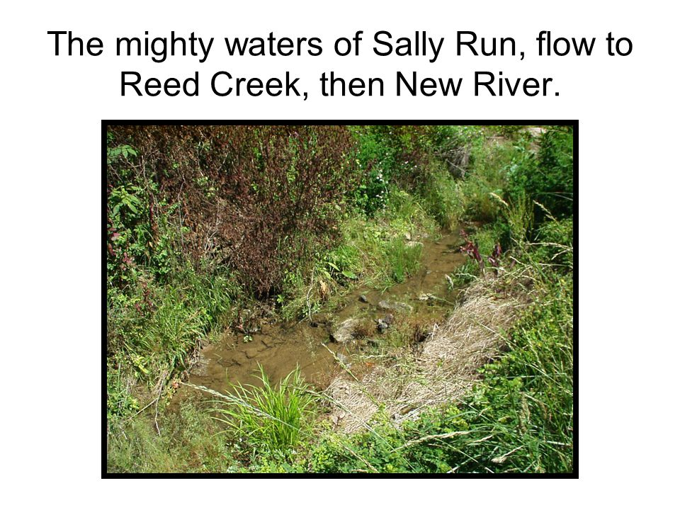 The mighty waters of Sally Run, flow to Reed Creek, then New River.