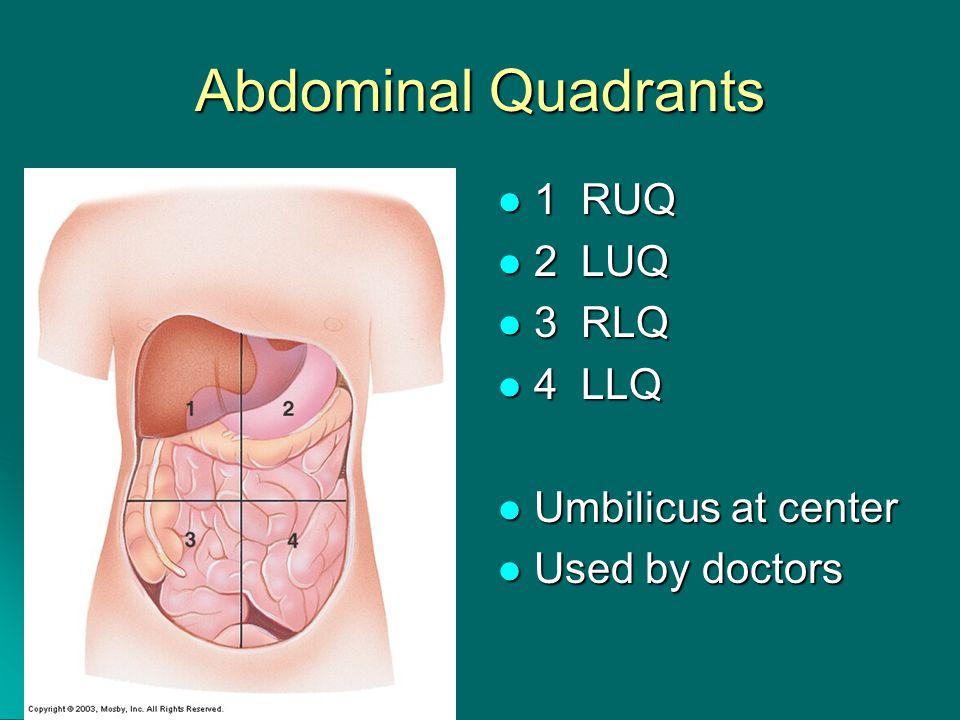 Abdominal Quadrants 1 RUQ 1 RUQ 2 LUQ 2 LUQ 3 RLQ 3 RLQ 4 LLQ 4 LLQ Umbilicus at center Umbilicus at center Used by doctors Used by doctors