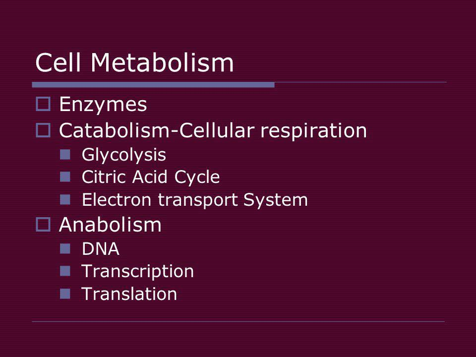 Cell Metabolism  Enzymes  Catabolism-Cellular respiration Glycolysis Citric Acid Cycle Electron transport System  Anabolism DNA Transcription Translation