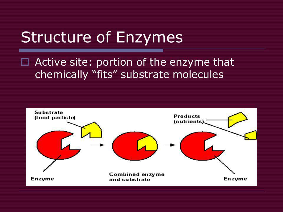 Structure of Enzymes  Active site: portion of the enzyme that chemically fits substrate molecules