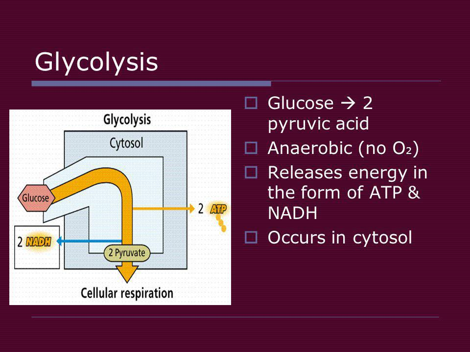 Glycolysis  Glucose  2 pyruvic acid  Anaerobic (no O 2 )  Releases energy in the form of ATP & NADH  Occurs in cytosol