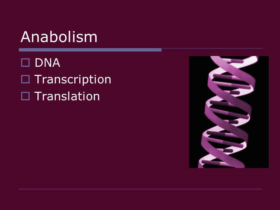 Anabolism  DNA  Transcription  Translation