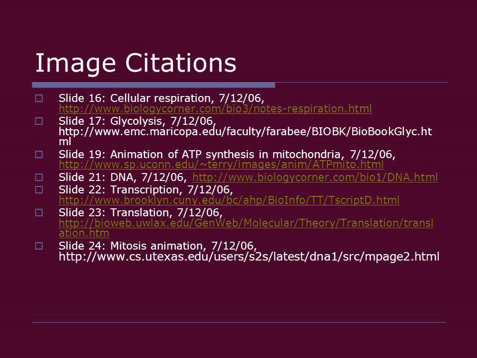 Image Citations  Slide 16: Cellular respiration, 7/12/06, http://www.biologycorner.com/bio3/notes-respiration.html http://www.biologycorner.com/bio3/notes-respiration.html  Slide 17: Glycolysis, 7/12/06, http://www.emc.maricopa.edu/faculty/farabee/BIOBK/BioBookGlyc.ht ml  Slide 19: Animation of ATP synthesis in mitochondria, 7/12/06, http://www.sp.uconn.edu/~terry/images/anim/ATPmito.html http://www.sp.uconn.edu/~terry/images/anim/ATPmito.html  Slide 21: DNA, 7/12/06, http://www.biologycorner.com/bio1/DNA.htmlhttp://www.biologycorner.com/bio1/DNA.html  Slide 22: Transcription, 7/12/06, http://www.brooklyn.cuny.edu/bc/ahp/BioInfo/TT/TscriptD.html http://www.brooklyn.cuny.edu/bc/ahp/BioInfo/TT/TscriptD.html  Slide 23: Translation, 7/12/06, http://bioweb.uwlax.edu/GenWeb/Molecular/Theory/Translation/transl ation.htm http://bioweb.uwlax.edu/GenWeb/Molecular/Theory/Translation/transl ation.htm  Slide 24: Mitosis animation, 7/12/06, http://www.cs.utexas.edu/users/s2s/latest/dna1/src/mpage2.html