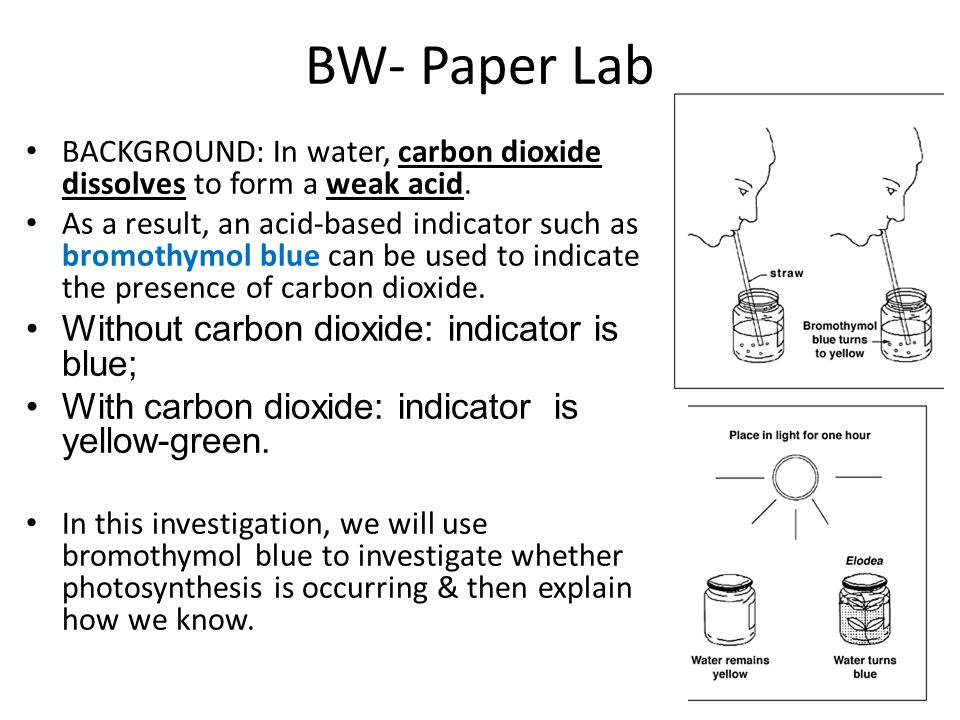 DAY 1 with Elodea plant in Bromothymol blue solution & CO 2 - there are 2 tubes that look like this – Put 1 tube on a light cart & put 1 tube in a drawer (dark) DAY 2: tube under light: in dark: