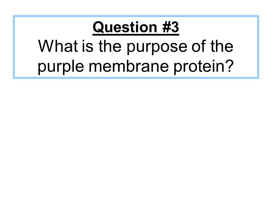 Question #3 What is the purpose of the purple membrane protein?