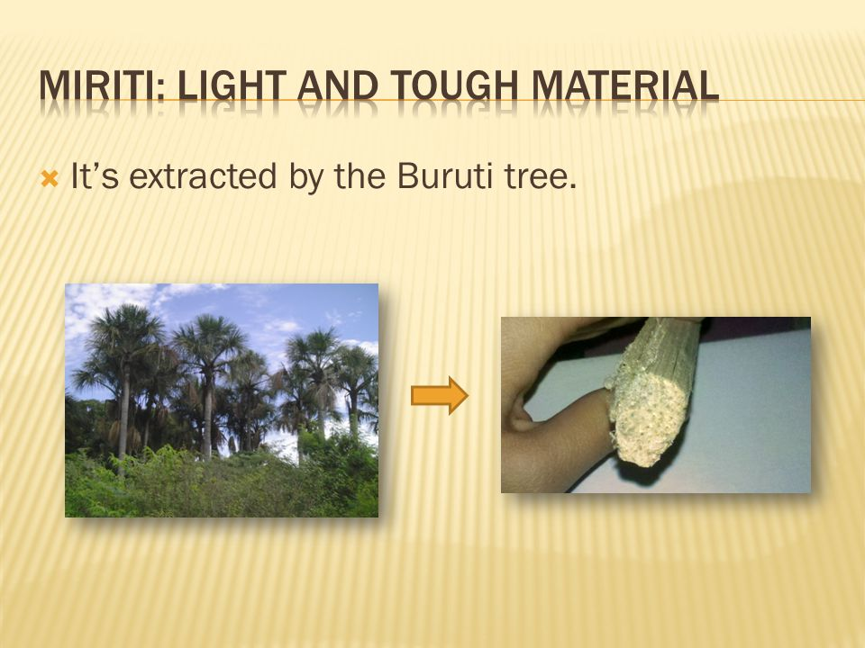  It's extracted by the Buruti tree.