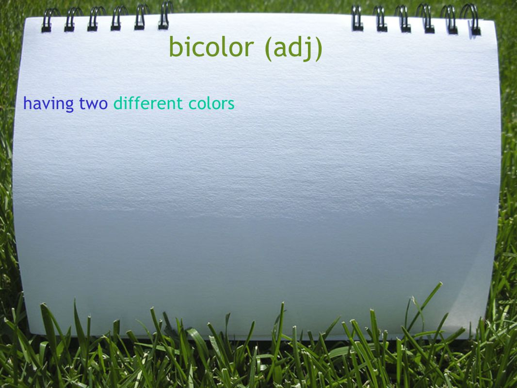 bicolor (adj) having two different colors