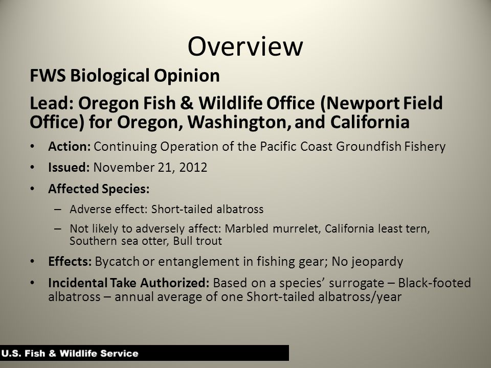 Overview FWS Biological Opinion Lead: Oregon Fish & Wildlife Office (Newport Field Office) for Oregon, Washington, and California Action: Continuing Operation of the Pacific Coast Groundfish Fishery Issued: November 21, 2012 Affected Species: – Adverse effect: Short-tailed albatross – Not likely to adversely affect: Marbled murrelet, California least tern, Southern sea otter, Bull trout Effects: Bycatch or entanglement in fishing gear; No jeopardy Incidental Take Authorized: Based on a species' surrogate – Black-footed albatross – annual average of one Short-tailed albatross/year