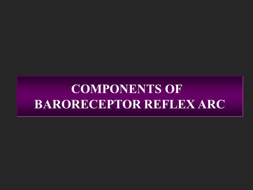 Components Of Baroreceptor Reflex Arc Receptors Afferents Center Efferents Effectors Baroreceptors in carotid sinuses & arch of aorta Carotid sinus ne
