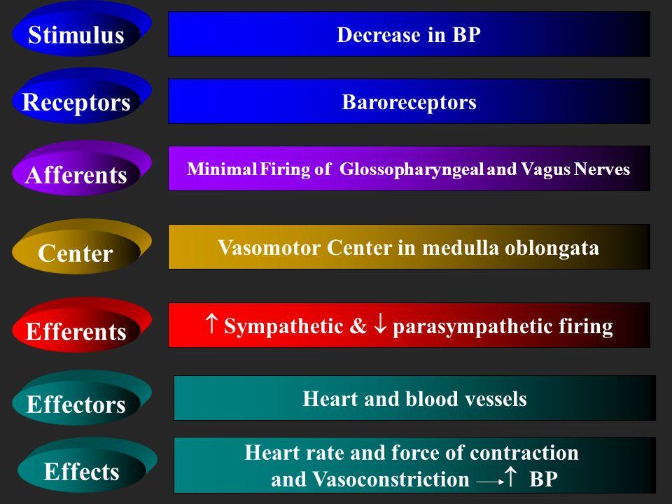 Receptors Afferents Center Efferents Effectors Baroreceptors Increase Firing of Glossopharyngeal and Vagus Nerves Vasomotor Center in medulla oblongat