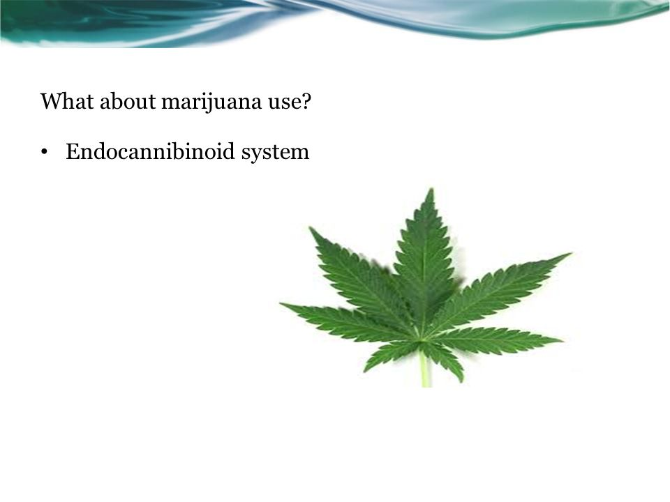 What about marijuana use Endocannibinoid system