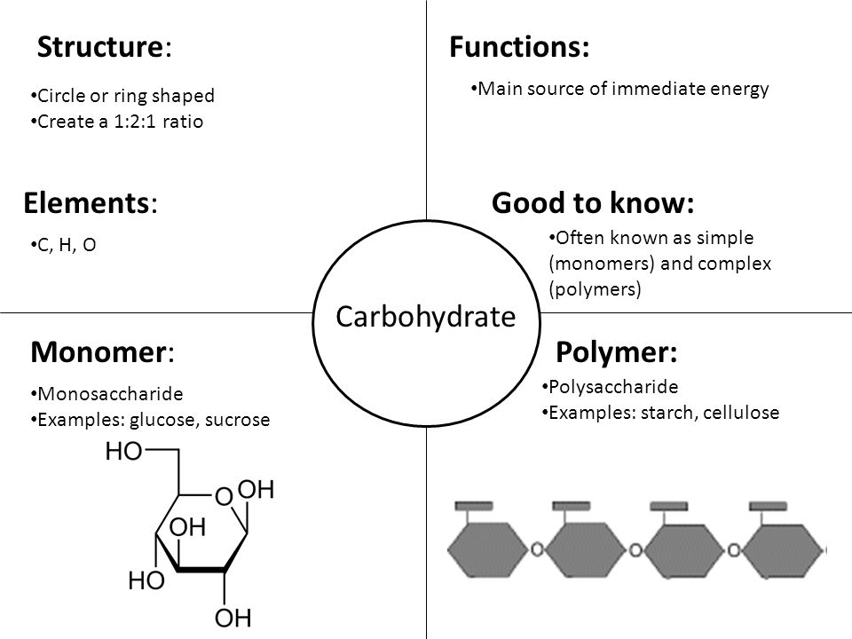Carbohydrate Structure:Functions: Monomer:Polymer: Circle or ring shaped Create a 1:2:1 ratio Elements: C, H, O Main source of immediate energy Good to know: Often known as simple (monomers) and complex (polymers) Monosaccharide Examples: glucose, sucrose Polysaccharide Examples: starch, cellulose