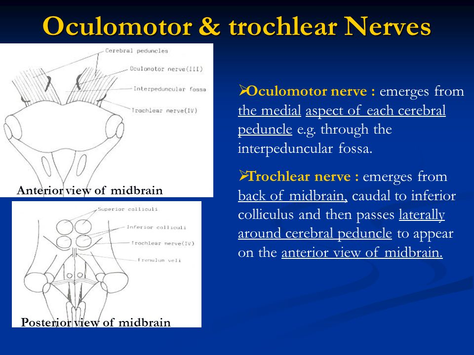 Lesions of cranial nerves III,IV and VI :  Oculomotor N.