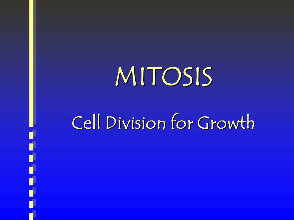 MITOSIS Cell Division for Growth