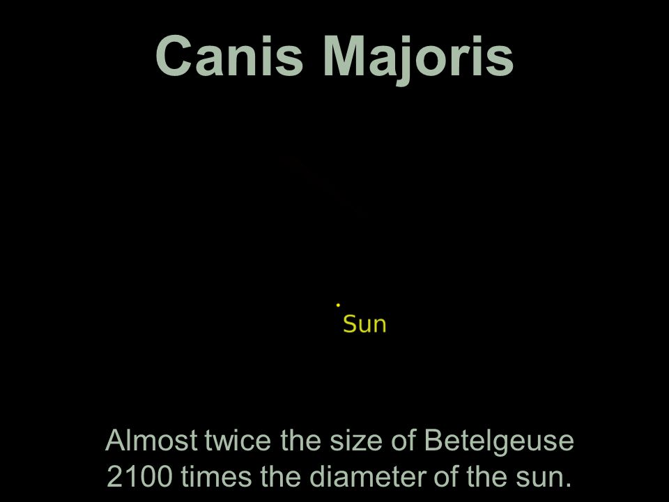 Canis Majoris Almost twice the size of Betelgeuse 2100 times the diameter of the sun.