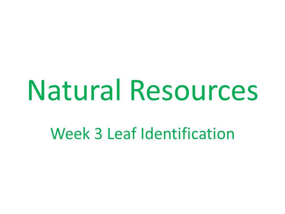 Natural Resources Week 3 Leaf Identification