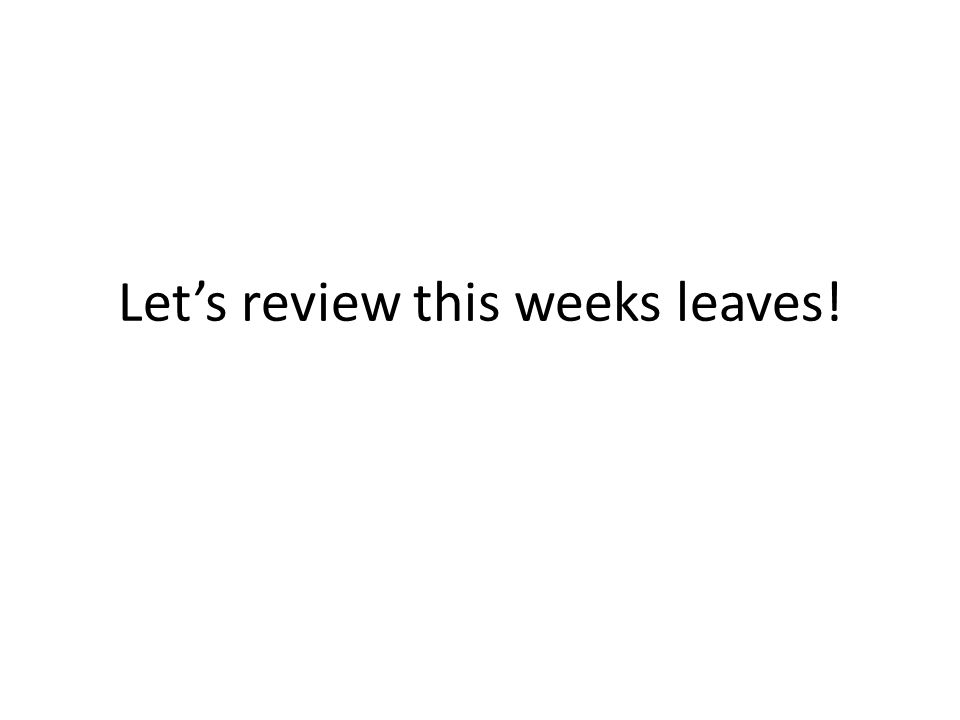 Let's review this weeks leaves!