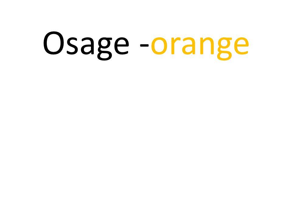 Osage -orange