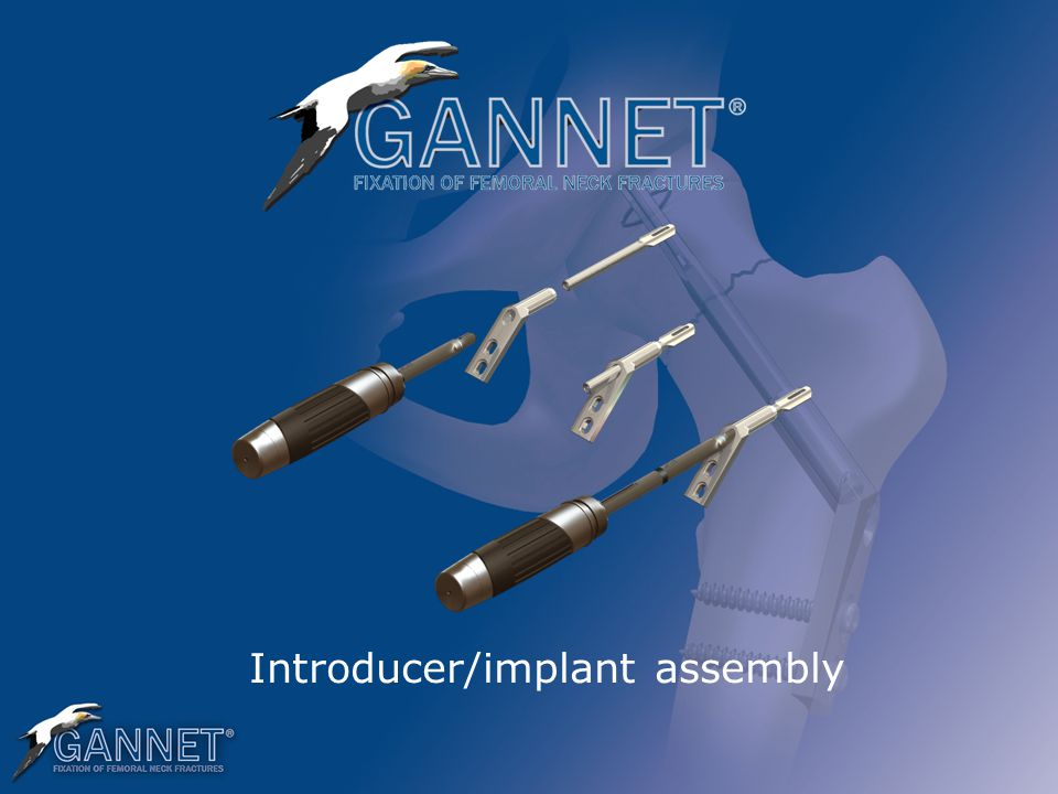 Introducer/implant assembly