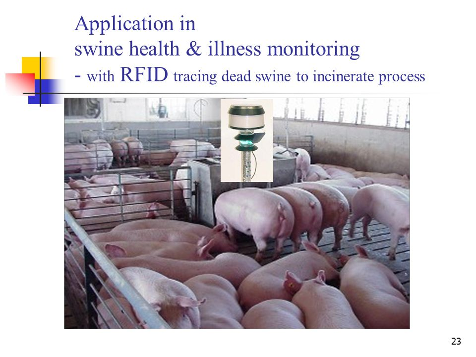 23 Application in swine health & illness monitoring - with RFID tracing dead swine to incinerate process