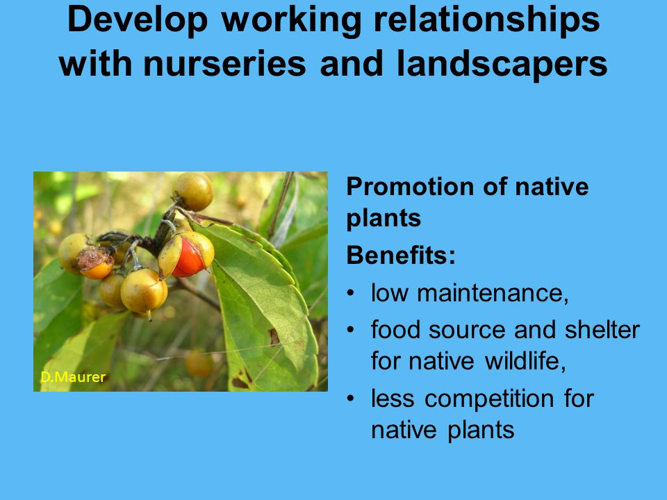 Develop working relationships with nurseries and landscapers Promotion of native plants Benefits: low maintenance, food source and shelter for native wildlife, less competition for native plants D.Maurer