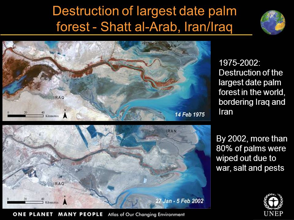 Destruction of largest date palm forest - Shatt al-Arab, Iran/Iraq 1975-2002: Destruction of the largest date palm forest in the world, bordering Iraq and Iran By 2002, more than 80% of palms were wiped out due to war, salt and pests
