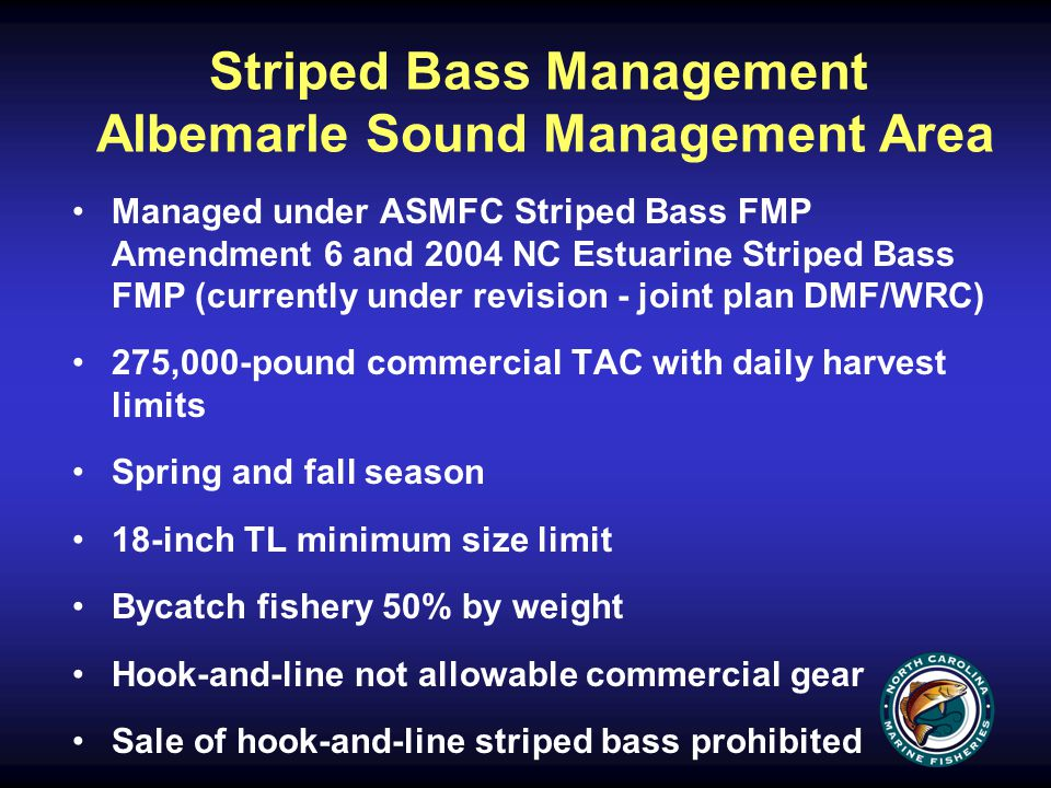 Striped Bass Management Albemarle Sound Management Area Managed under ASMFC Striped Bass FMP Amendment 6 and 2004 NC Estuarine Striped Bass FMP (currently under revision - joint plan DMF/WRC) 275,000-pound commercial TAC with daily harvest limits Spring and fall season 18-inch TL minimum size limit Bycatch fishery 50% by weight Hook-and-line not allowable commercial gear Sale of hook-and-line striped bass prohibited