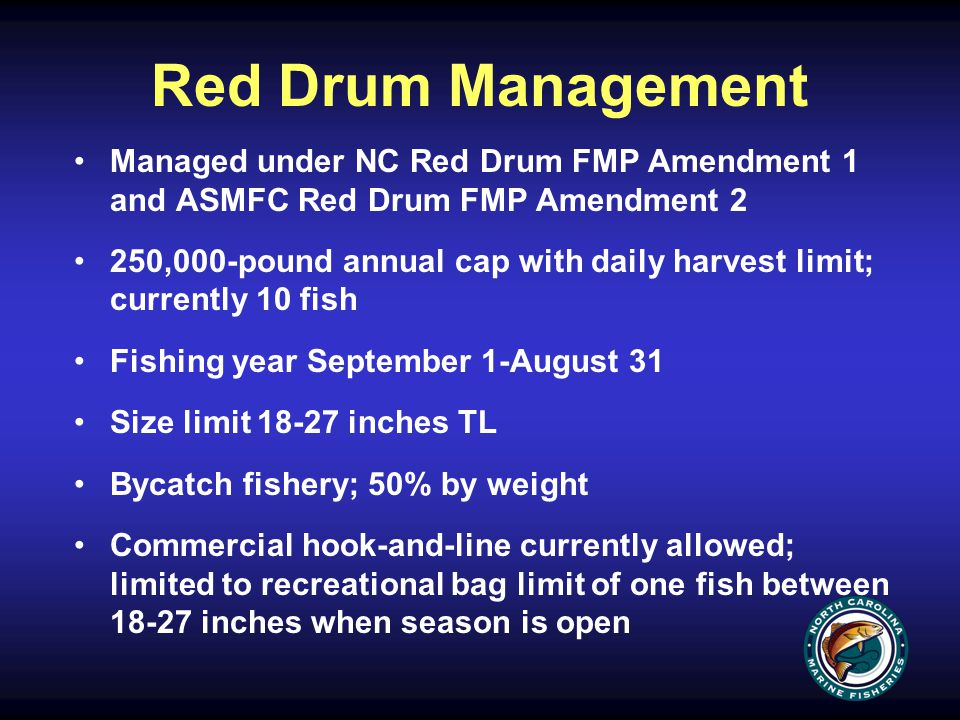 Red Drum Management Managed under NC Red Drum FMP Amendment 1 and ASMFC Red Drum FMP Amendment 2 250,000-pound annual cap with daily harvest limit; currently 10 fish Fishing year September 1-August 31 Size limit 18-27 inches TL Bycatch fishery; 50% by weight Commercial hook-and-line currently allowed; limited to recreational bag limit of one fish between 18-27 inches when season is open