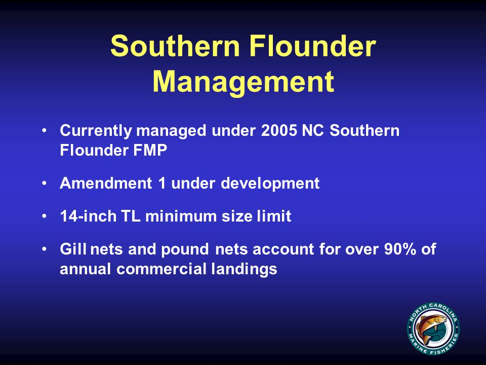 Southern Flounder Management Currently managed under 2005 NC Southern Flounder FMP Amendment 1 under development 14-inch TL minimum size limit Gill nets and pound nets account for over 90% of annual commercial landings